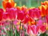 Цветотерапия: красный, красный цвет, свойства красного цвета