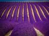 Цветотерапия, фиолетовый цвет, свойства, качества, лечение фиолетовым цветом, фиолетовая аффирмация, фиолетовые продукты, сахасрара чакра, теменная чакра, седьмая чакра